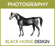 Black Horse Design Photography (Warwickshire Horse)