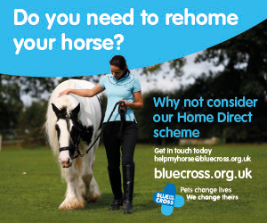 Blue Cross 2020 A (Warwickshire Horse)