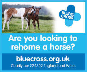 Blue Cross 2020 B (Warwickshire Horse)