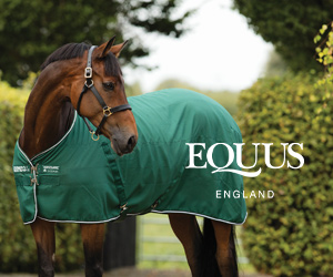Equus (Warwickshire Horse)